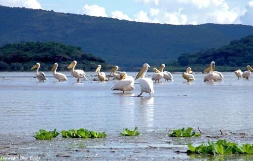 Lake Chamo