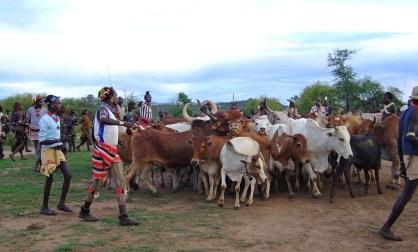 Ethiopia Hamar bull jumping
