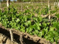 Argentina, Cafayate, winery