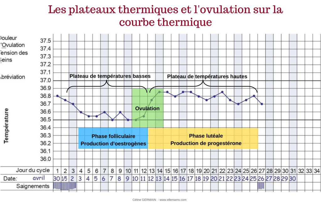 température-symptothermie