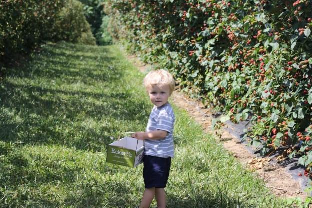 Blackberry Adventures at Eckert's   Ellie And Addie