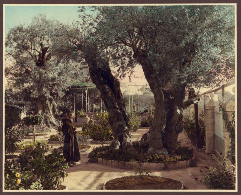 historical photo of palestine