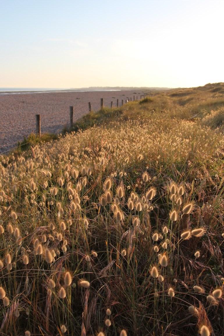 sand dunes sussex