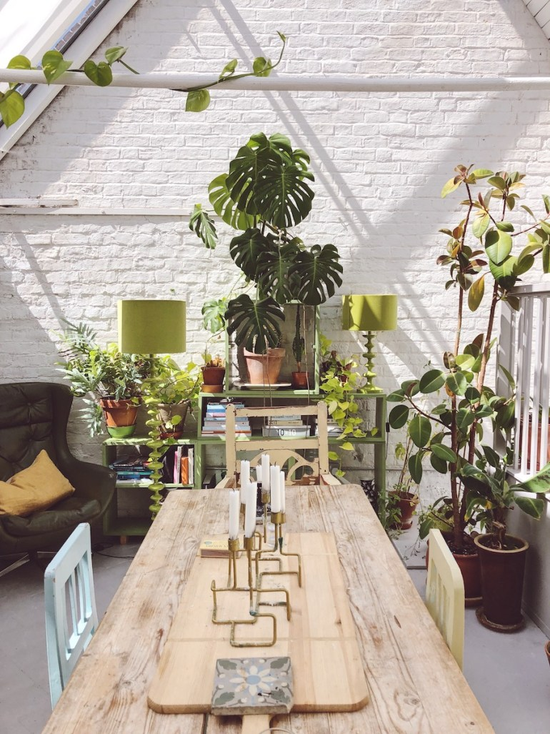 kitchen filled with plants