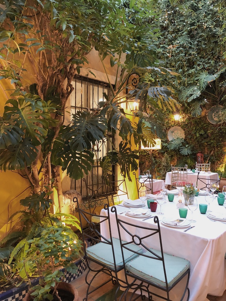 dining table and plants