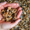 oatmeal cookie granola after baking, clusters held in hands