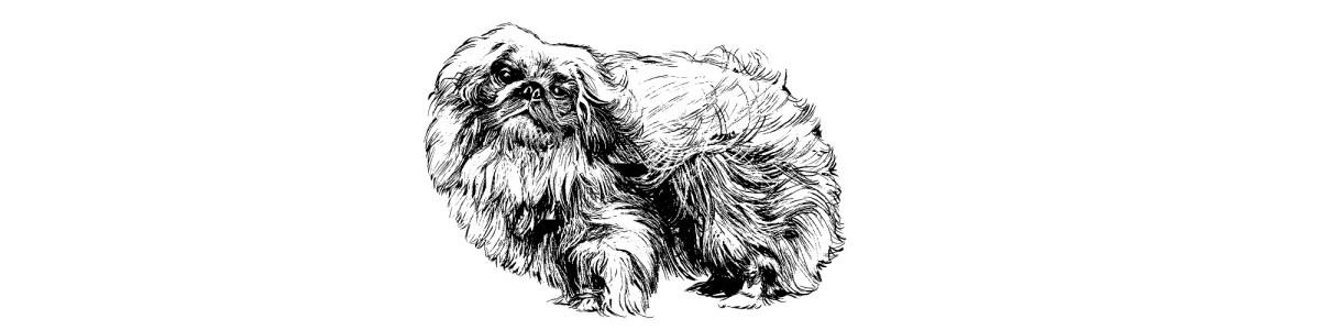 Pekingese dog illustration
