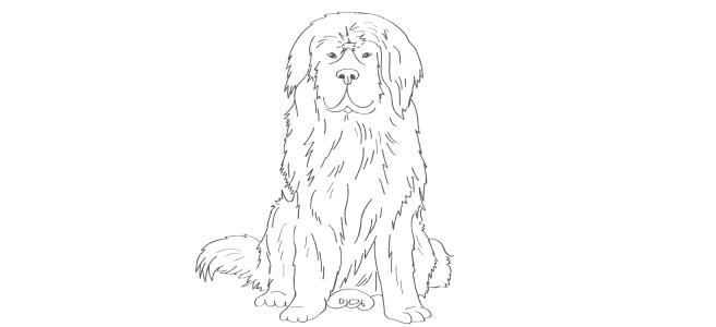 newfoundland dog illustration