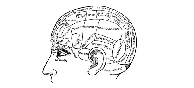 parts of brain illustration