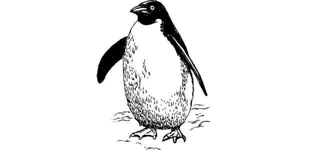 "Penguin illustration - ""Mistaken Identity"" flash fiction"