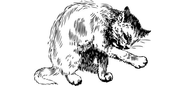 "Cat licking paw illustration - ""Rubble"" flash fiction"