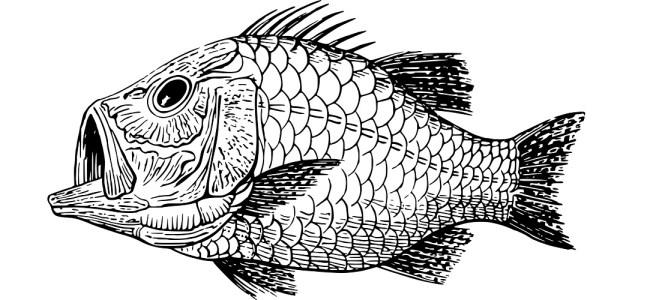 "Fish illustration ""Tiny Explosion. Big Leak"" microfiction"