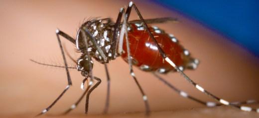 Έλληνας επιστήμονας έκανε τα κουνούπια ανθεκτικά στον δάγκειο πυρετό
