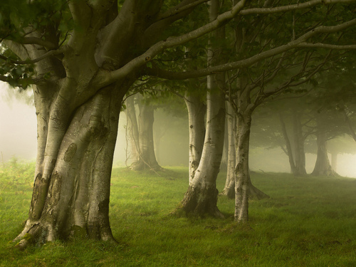 Foggy Forest, Basque Country, Spain