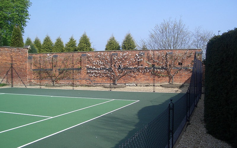Espaliered trees behind the tennis court