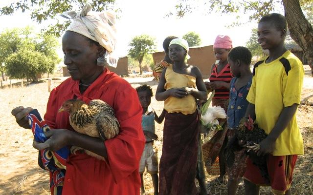 Newcastle Disease Mozambique Veterinary Development