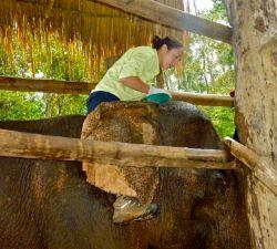hands-on-elephant-treatment-Laos