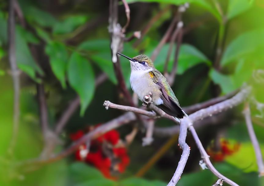 Birds Gallery
