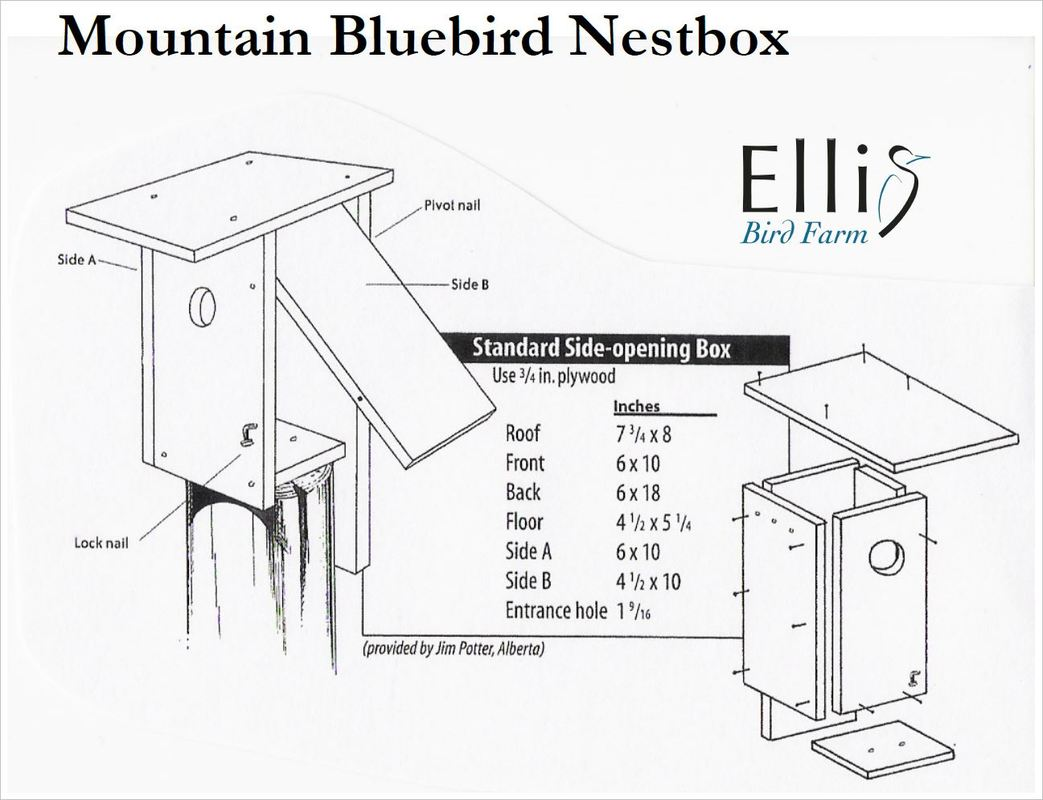 Bluebird House Dimensions