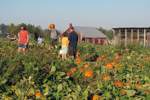 Pick your own Pumpkins near Saratoga Springs