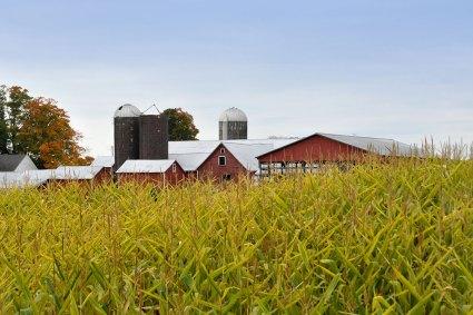 Corn maze at Ellms Family Farm in Ballston Spa