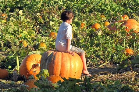 pick your own pumpkins in saratoga near albany and clifton park