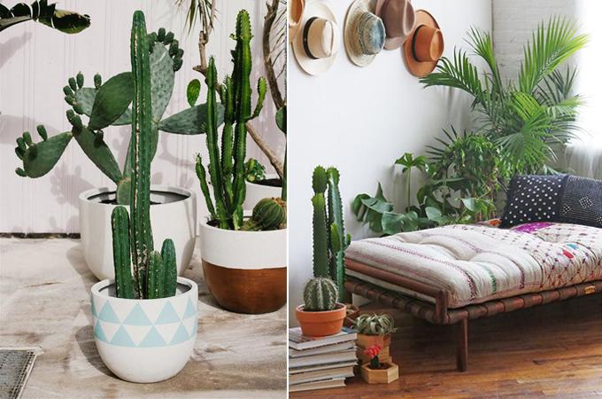 succulent cactus interior design styling www.ellymacdonalddesign.com5