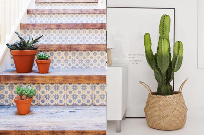 succulent cactus interior design styling www.ellymacdonalddesign3