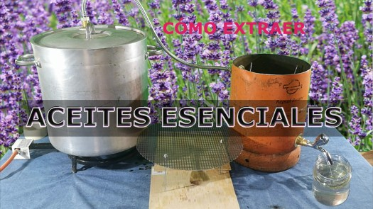 imagen aceites esenciales