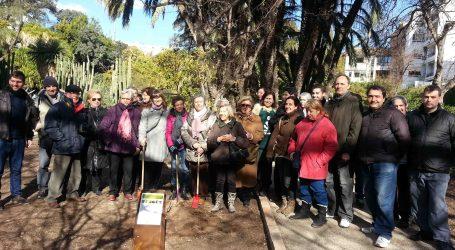 El Jardín Botánico cuenta con un ejemplar de la Higuera Burjassot Blanca
