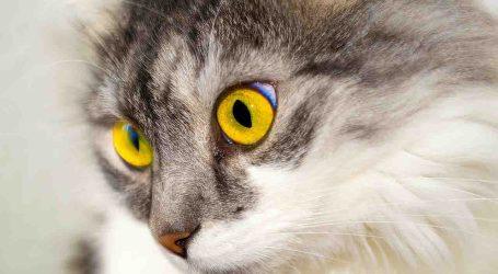 Almàssera se sensibiliza y se adhiere a la campaña iniciada por la protectora Conexión Felina