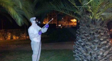 Burjassot intensifica estos días el tratamiento contra el Picudo Rojo de las palmeras