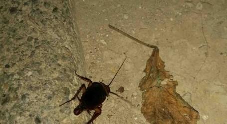 El PP exige al alcalde acabar con la plaga de ratas y cucarachas de Paterna