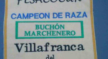 La Asociación de criadores del buchón valenciano de Burjassot finaliza 2015 con grandes resultados