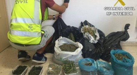 La Guardia Civil interviene 498 plantas de marihuana en Picassent