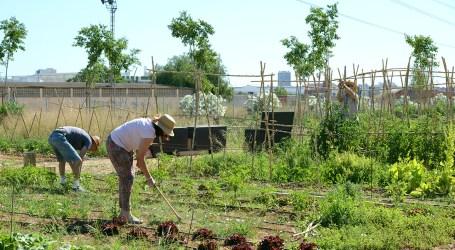 L'Ajuntament de Paiporta adjudicarà 35 horts urbans