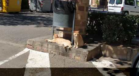 <p>Denuncian una agresión por proteger a varios gatos del ataque de dos perros en Albal</p>  <p><span style='color: #424949;line-heigth: 16px;font-size: 16px;'>La propietaria de los canes agarró del pelo y empujó a la presidenta de una asociación protectora</span></p>
