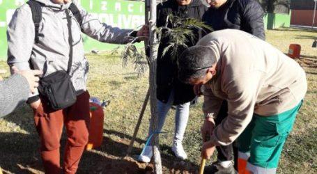 Paterna planta más de 3.000 árboles en 3 años