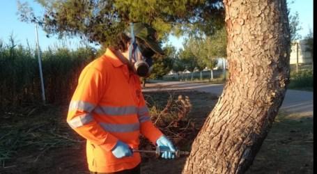 Catarroja injecta en els troncs dels arbres una substància fitosanitària que actua contra la procesionaria