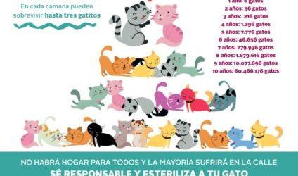 Paterna lanza una campaña de sensibilización con motivo del Día del Gato