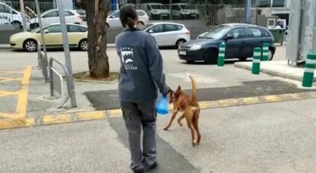 Paterna aumenta los servicios del Refugio Animal y autoriza a sus voluntarios