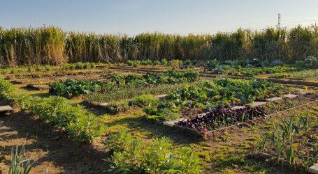 Paterna prorroga el acuerdo de Huerto Multiverso con Jóvenes de La Coma para fomentar la agricultura ecológica