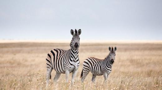 أبرز الحيوانات الأفريقية