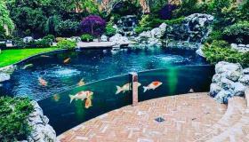 ديكورات أحواض سمك 2020 أجدد أشكال وتصميمات أحواض أسماك الزينة المنزلية