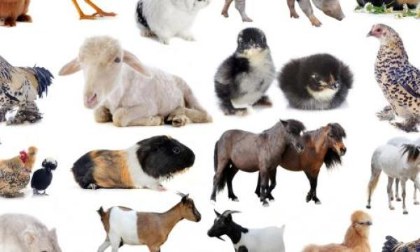 أصوات الحيوانات والأشياء
