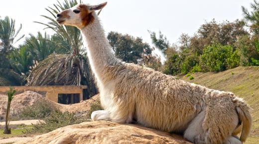أفريكانو بارك .. رحلة رائعة في الإسكندرية
