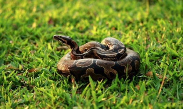 أهم أنواع الثعابين في العالم
