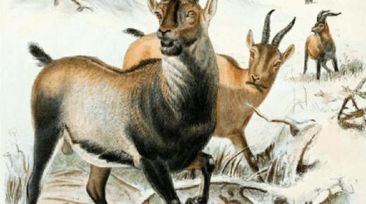 أهم المعلومات عن الانقراض