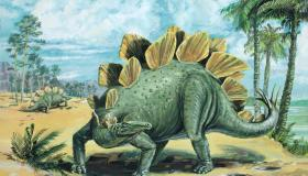 أهم المعلومات عن الديناصور ستيجوصورس