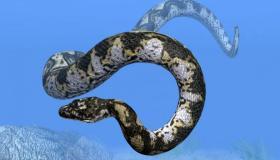 أهم المعلومات عن ثعبان التيتانوبوا
